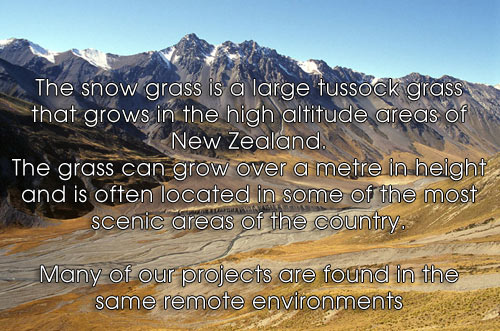 The snowgrass explained